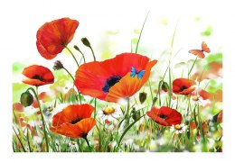 Fototapeta 400 x 270 cm - Country poppies